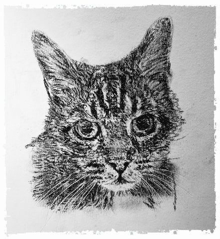 charcoal-portrait-mickey-cat-2
