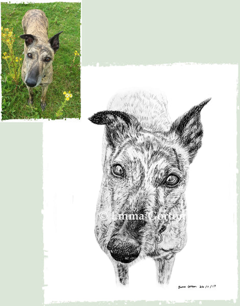 charcoal-portrait-mollie-greyhound-2
