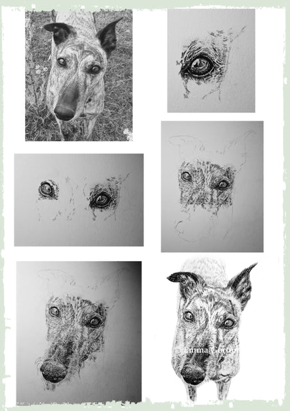 charcoal-portrait-mollie-greyhound