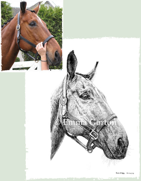 charcoal-portrait-pete-horse-1