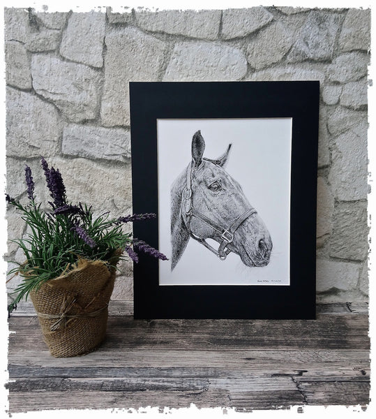 charcoal-portrait-pete-horse-2