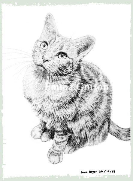 charcoal-portrait-phoebe-cat