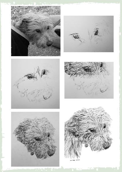 charcoal-portrait-ruby-terrier