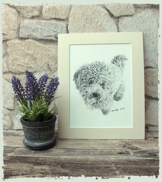 charcoal-portrait-small-dog-8
