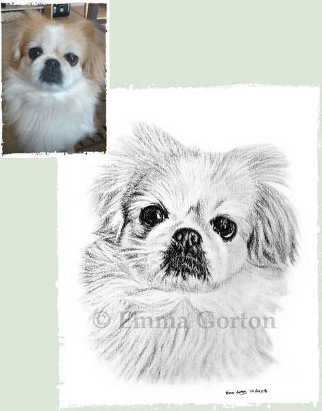 charcoal-portrait-small-dog-maple-1
