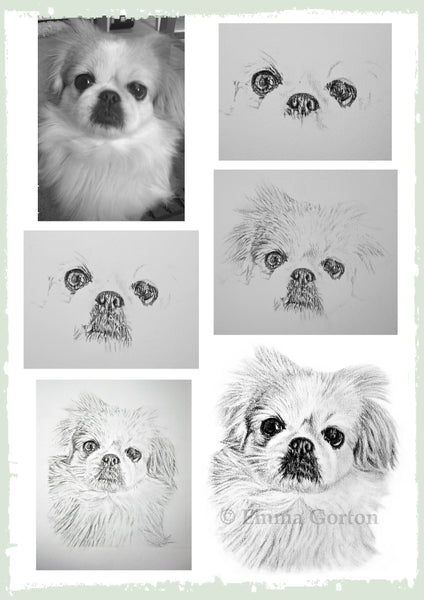 charcoal-portrait-small-dog-maple