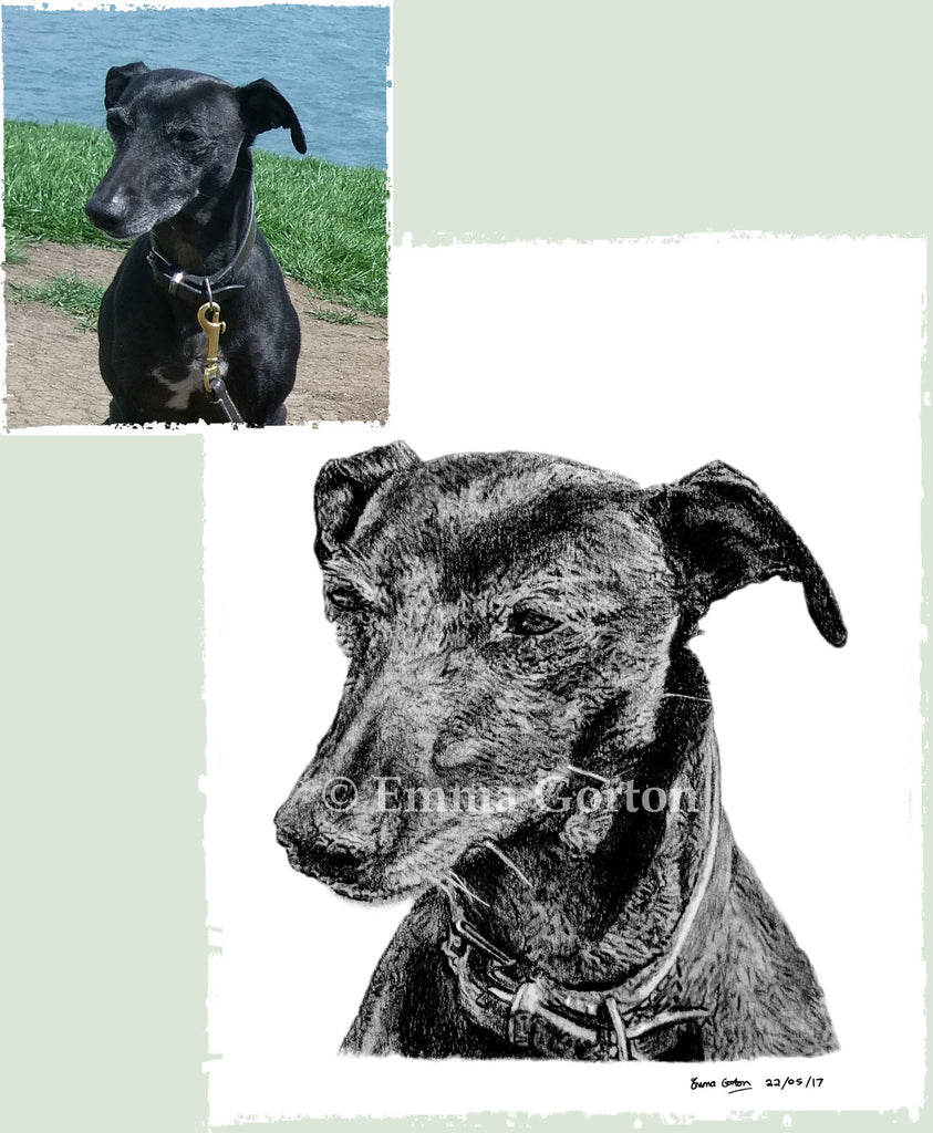 dog-portrait-gloucestershire-8
