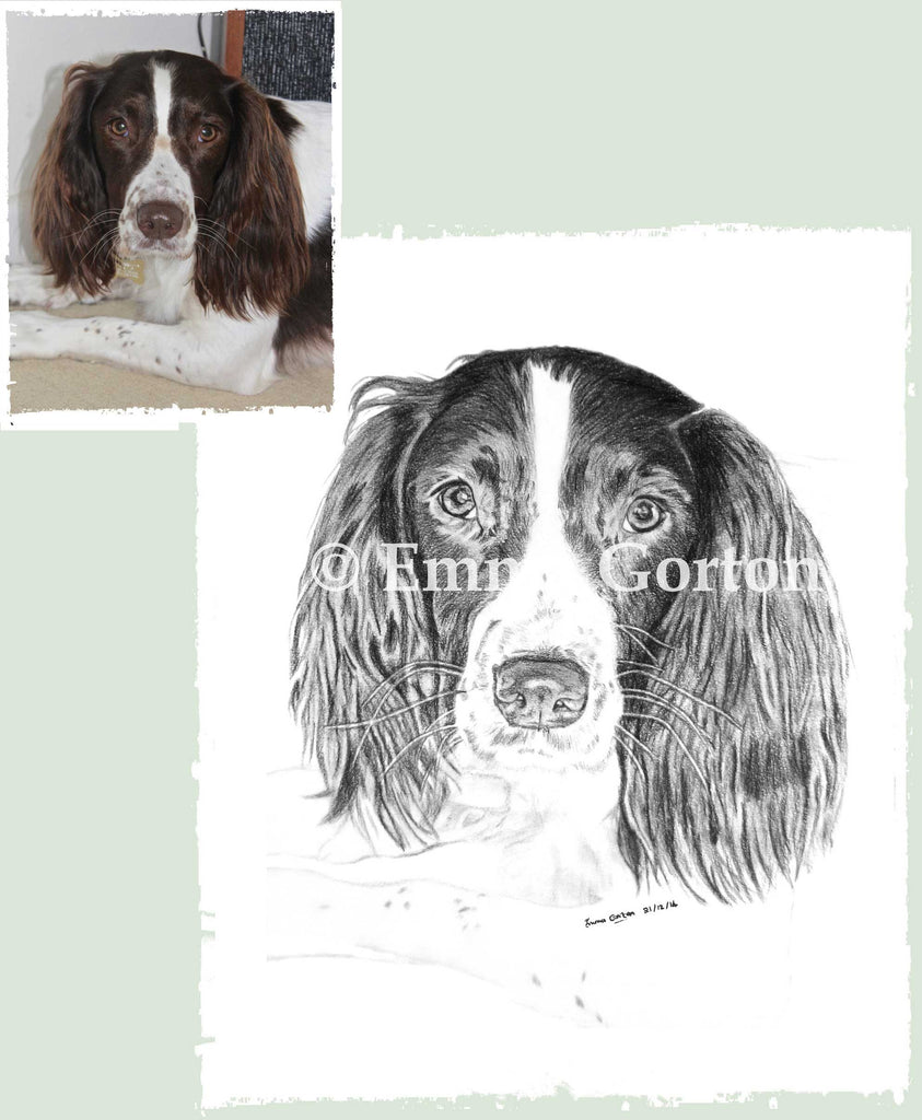 dog-portraits-cotswolds-3