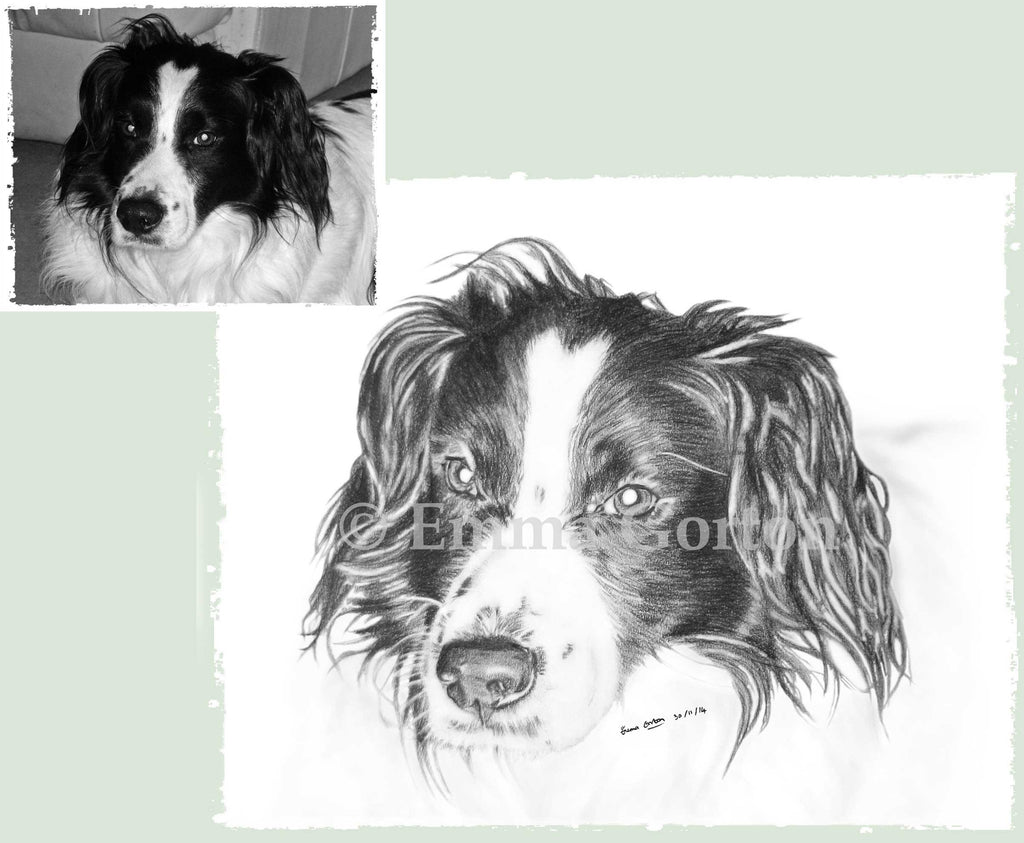 dog-portraits-gloucestershire-4