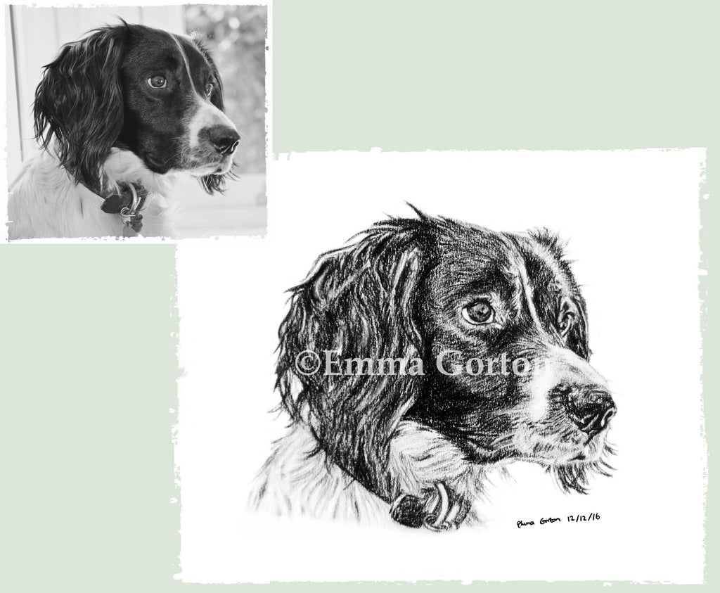 dog-portraits-gloucestershire-5