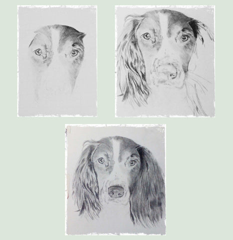 hand-drawn-pet-portraits-3