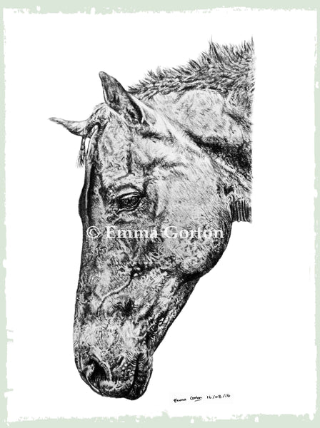 horse-portrait-cotswolds-3