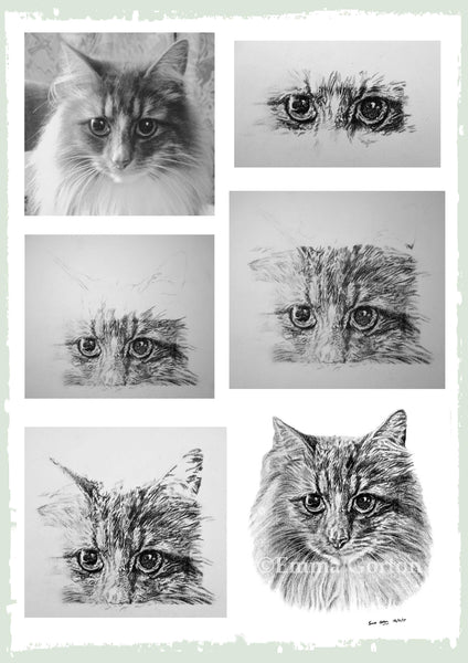 personalised-cat-drawing-ben3.jpg
