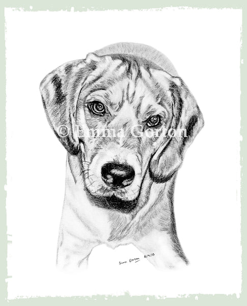 personalised-pet-drawings-1
