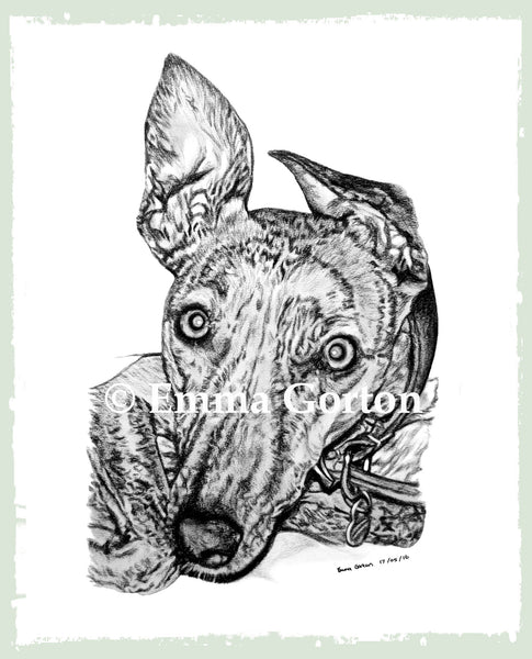 pet-drawings-gloucestershire-1