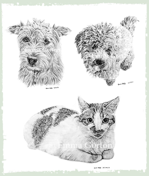 pet-drawings-gloucestershire-3