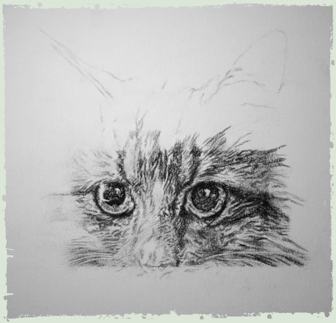 personalised-cat-drawings-ben2