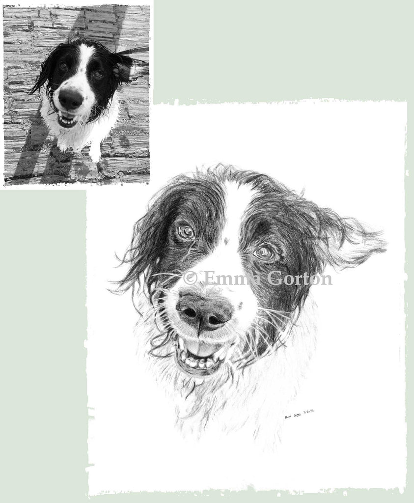 pet-portraits-cotswolds-4
