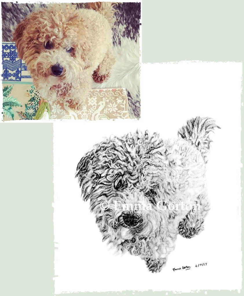 pet-portraits-cotswolds-6