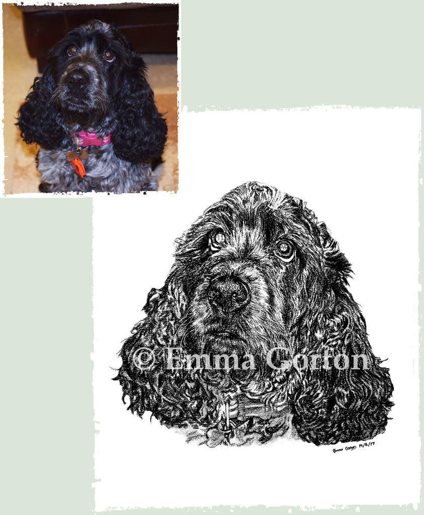 pet-portraits-cotswolds-7