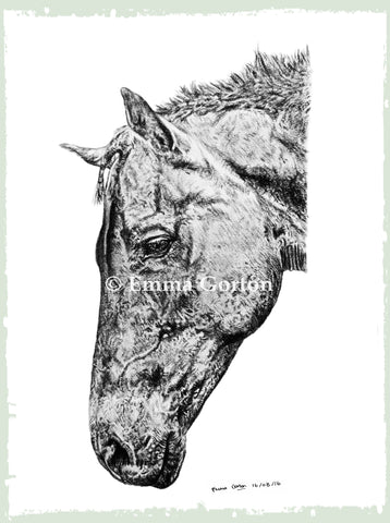 custom-pet-drawings-cotswolds-horse