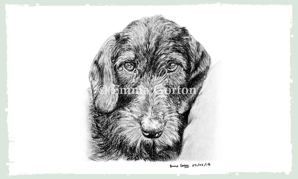 dog-portraits-7