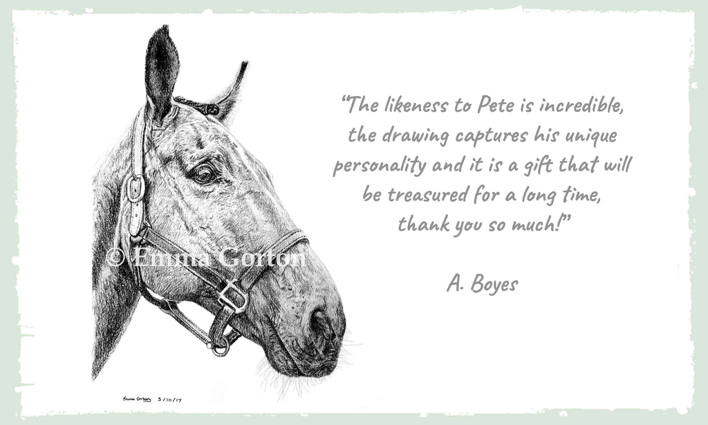 Detailed-Horse-Portrait-Drawing-Gloucestershire