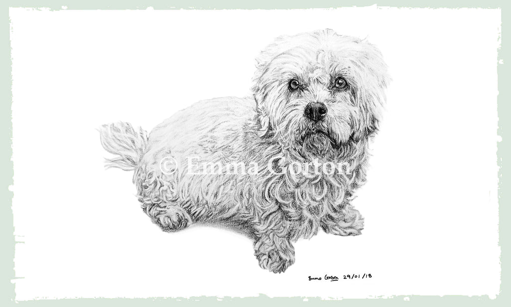 dog-portraits-8