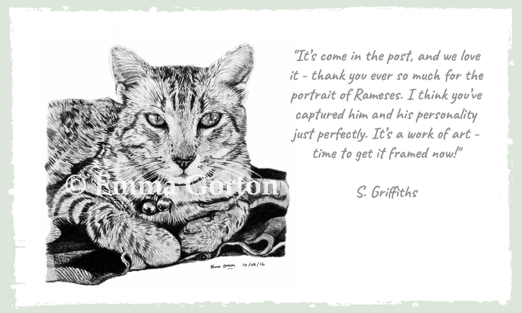 testimonial-cat-portrait-gloucestershire
