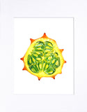 "Kiwano Horned Melon 8""x10"" matted print"