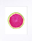 "Watermelon Radish 8""x10"" matted print"