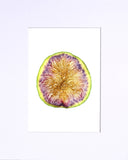 "White Fig 5""x7"" matted print"