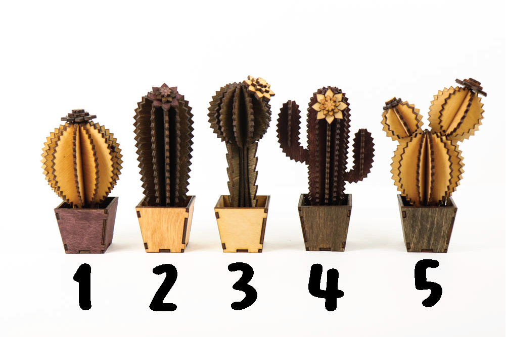 DIY Cactus Project - Build Your Own Cactus Kit