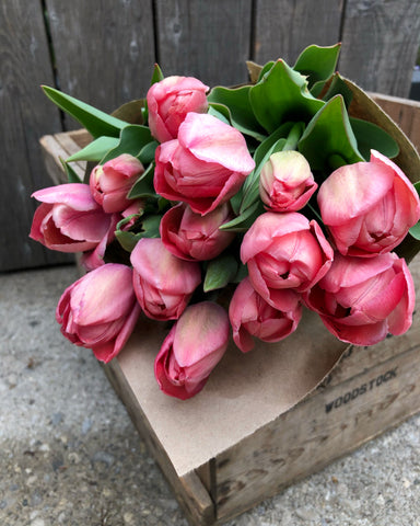 *Fresh Cut Tulips* - Mystic Van Eijk