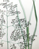 Vintage Botanical Print - 'Tufted Hair Grass'