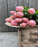*Fresh Cut Tulips* - Apricot Delight