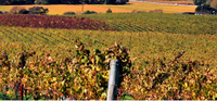 Climate change and Bordeaux Wine blog - MWH Wines