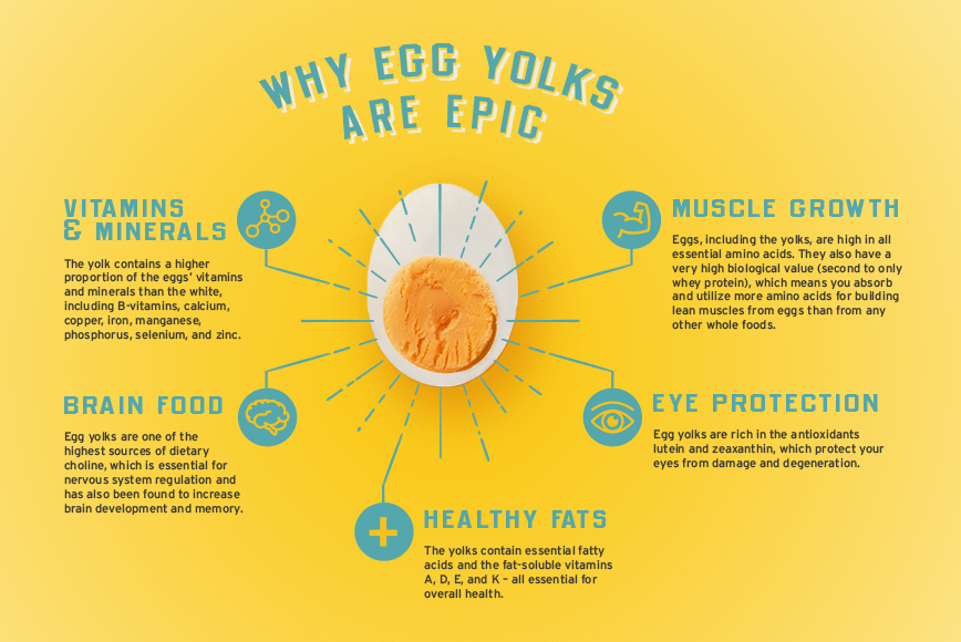 Infographic explaining the benefits of eating egg yolks