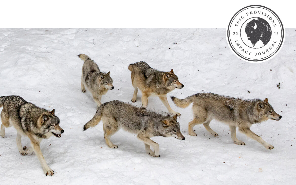 "a pack of wolves walks across a snowy forest. In a small corner, there's a circular logo that reads ""EPIC Provisions 2019 Impact Journal"""