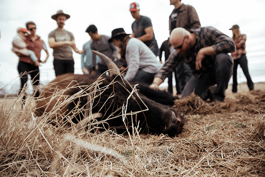 Group of people standing around dead bison in the field