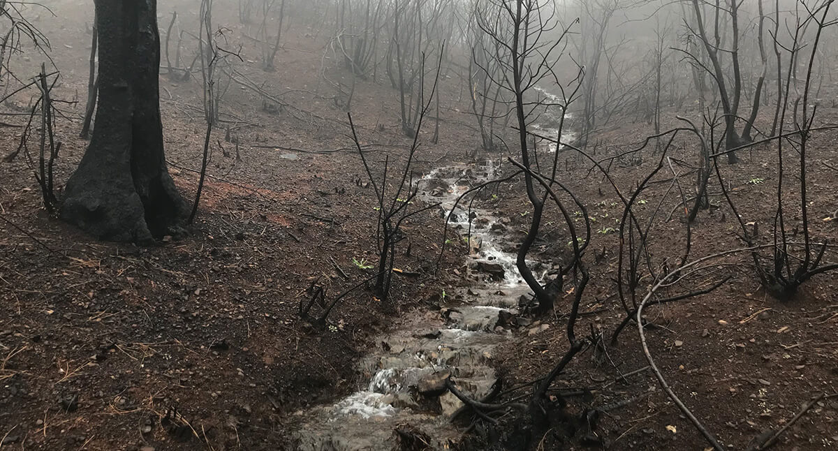 a creek going through a forrest. The trees around it are black and bare showing the aftermath of the Paradise fire.