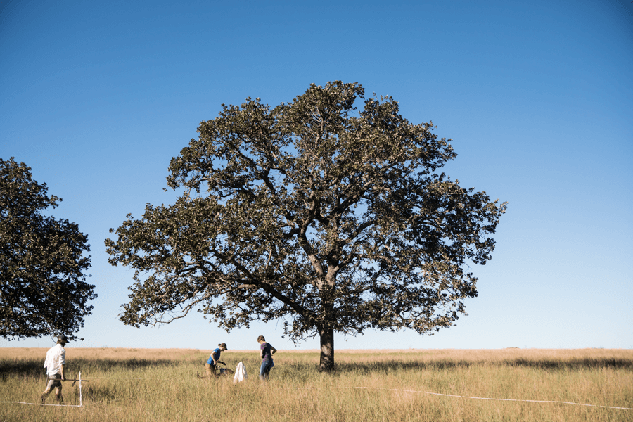 A large tree and three people working on a field with open blue sky in background