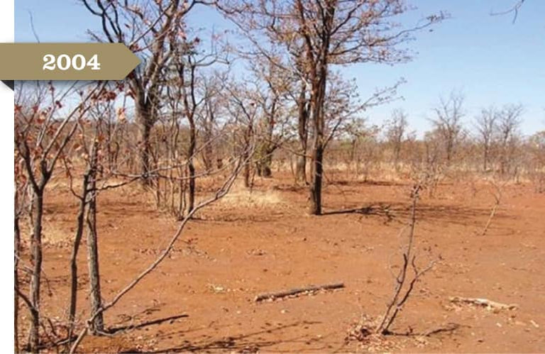 2004: A patch of barren land. The trees have no leave and the soil is bare.