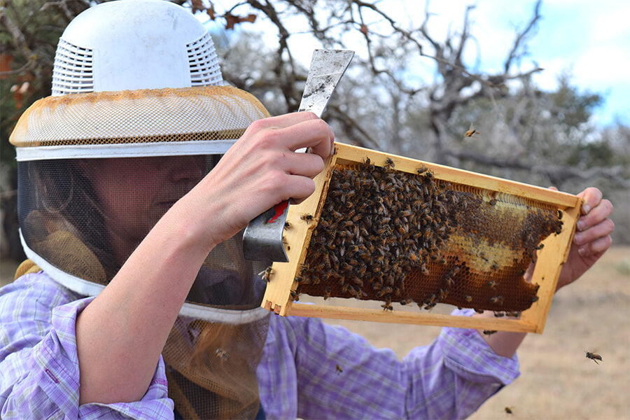 Woman holding panel with live honey bees