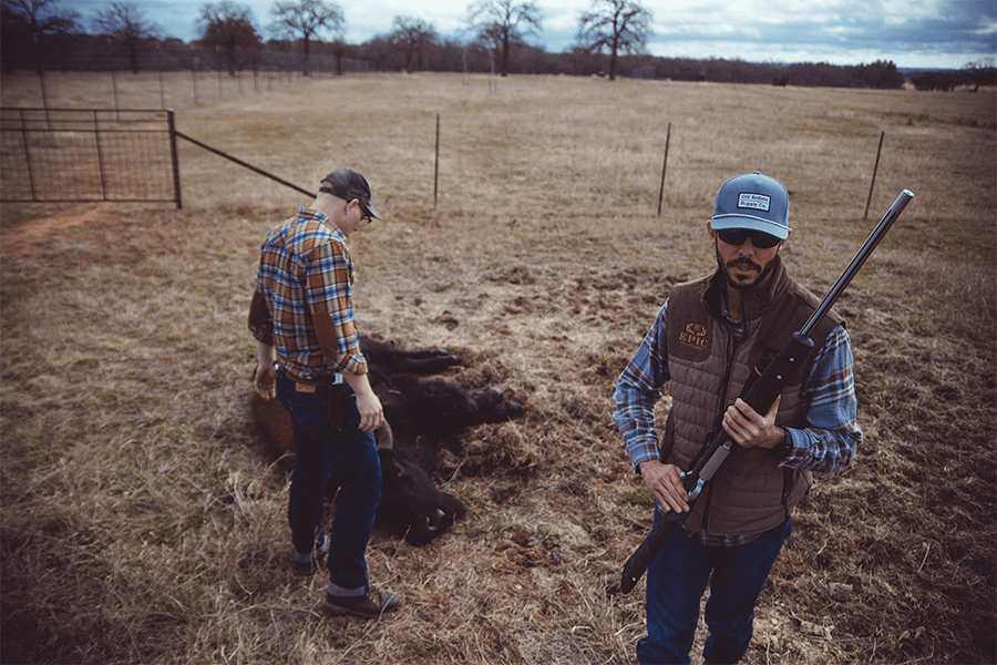 Two men, one holding a gun, next to a dead bison in the field