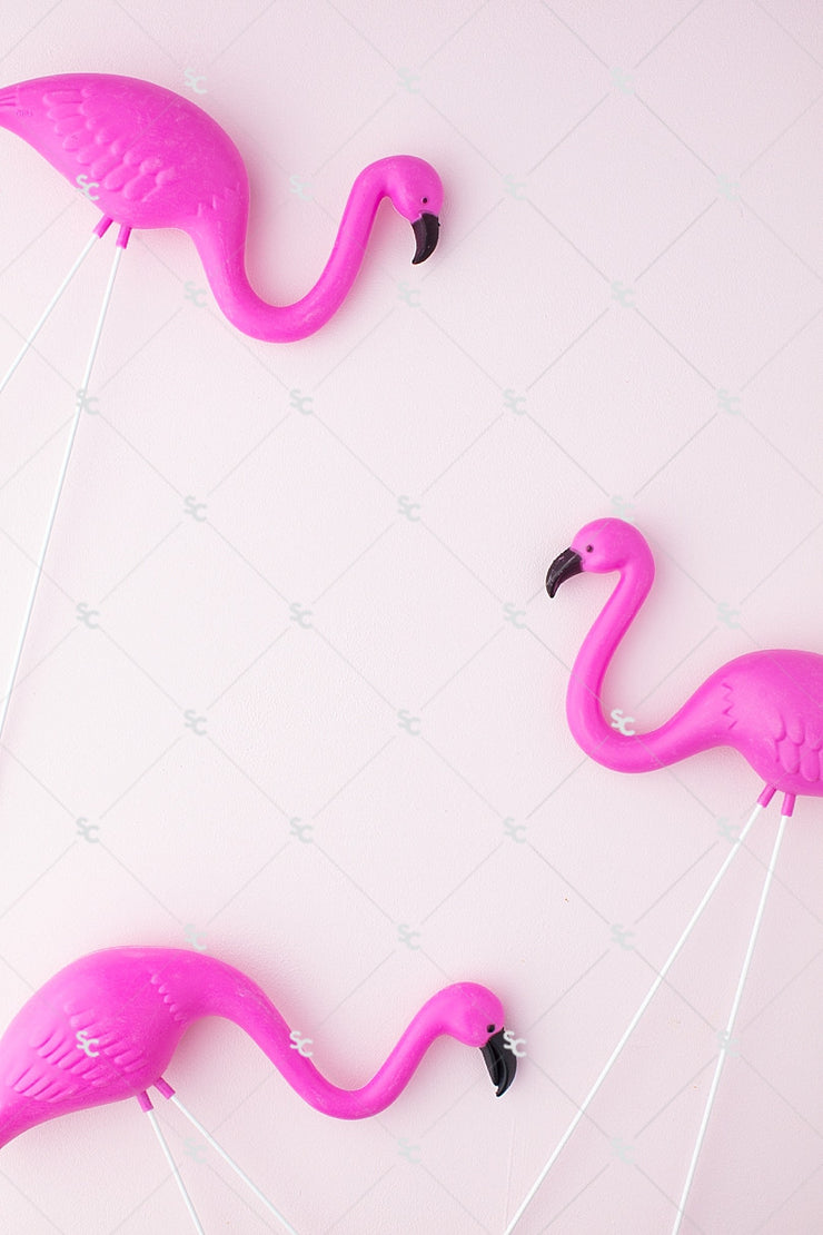 Summer Styled Stock Collection | Flamingos