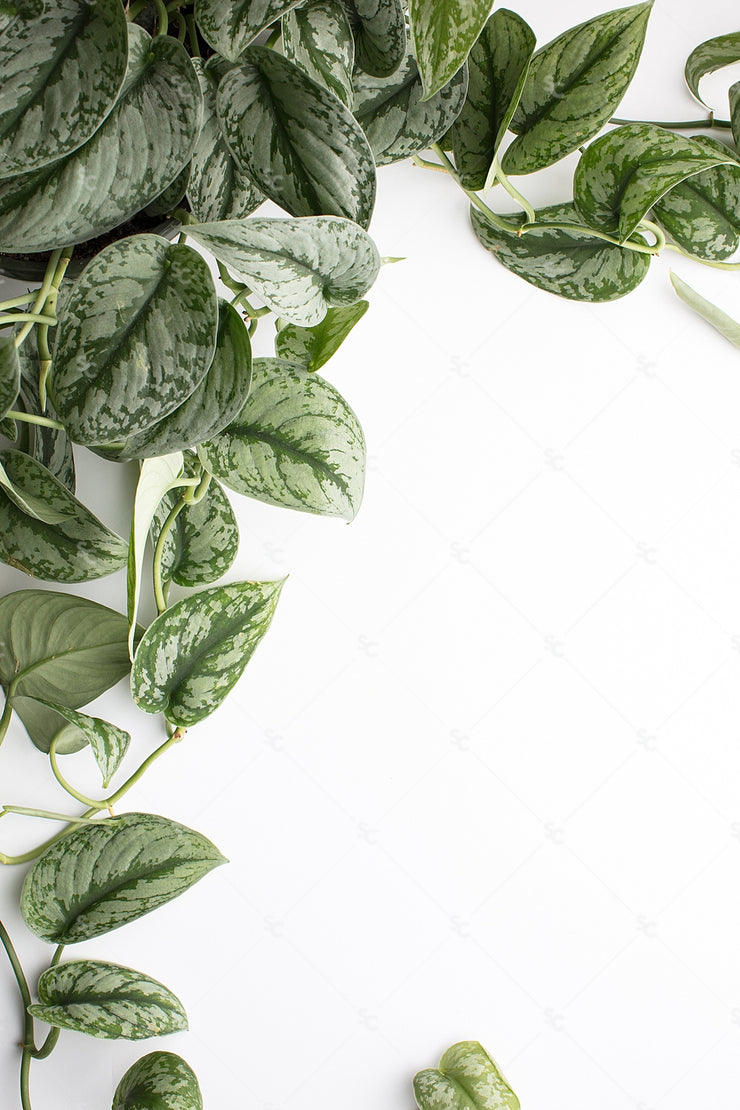 This styled stock image of greenery on white