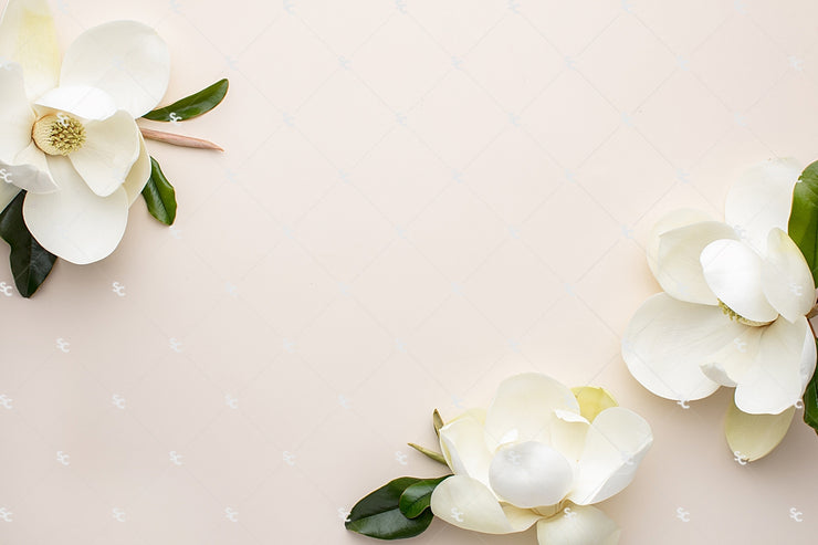 This styled stock image of white magnolias on a cream background