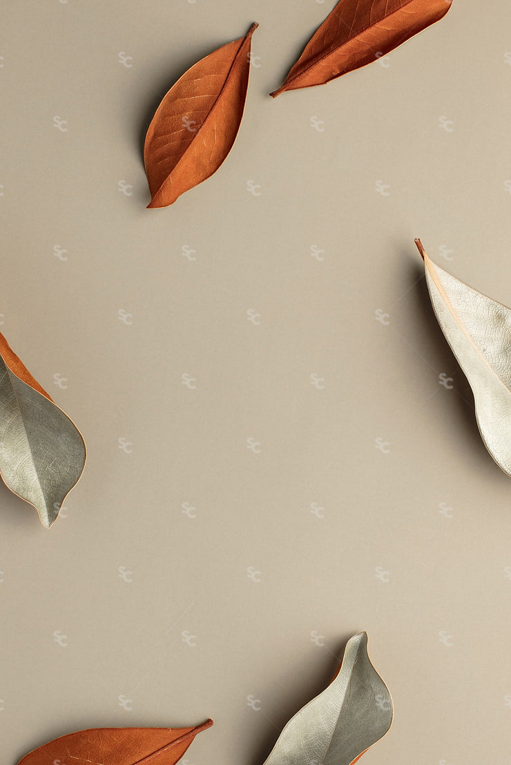 Fall leaves on a neutral background
