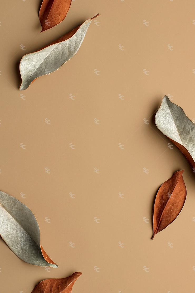 fall leaves on a brown background